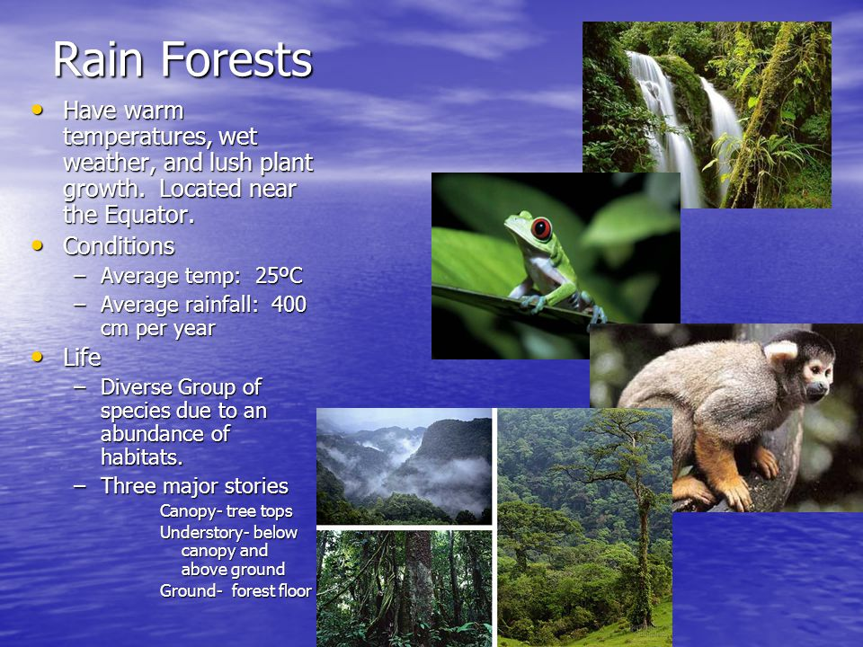 Rain Forests Have warm temperatures, wet weather, and lush plant growth. Located near the Equator.