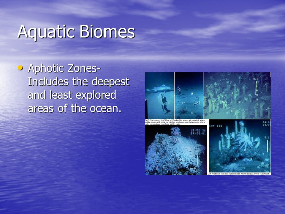 Aquatic Biomes Aphotic Zones- Includes the deepest and least explored areas of the ocean.