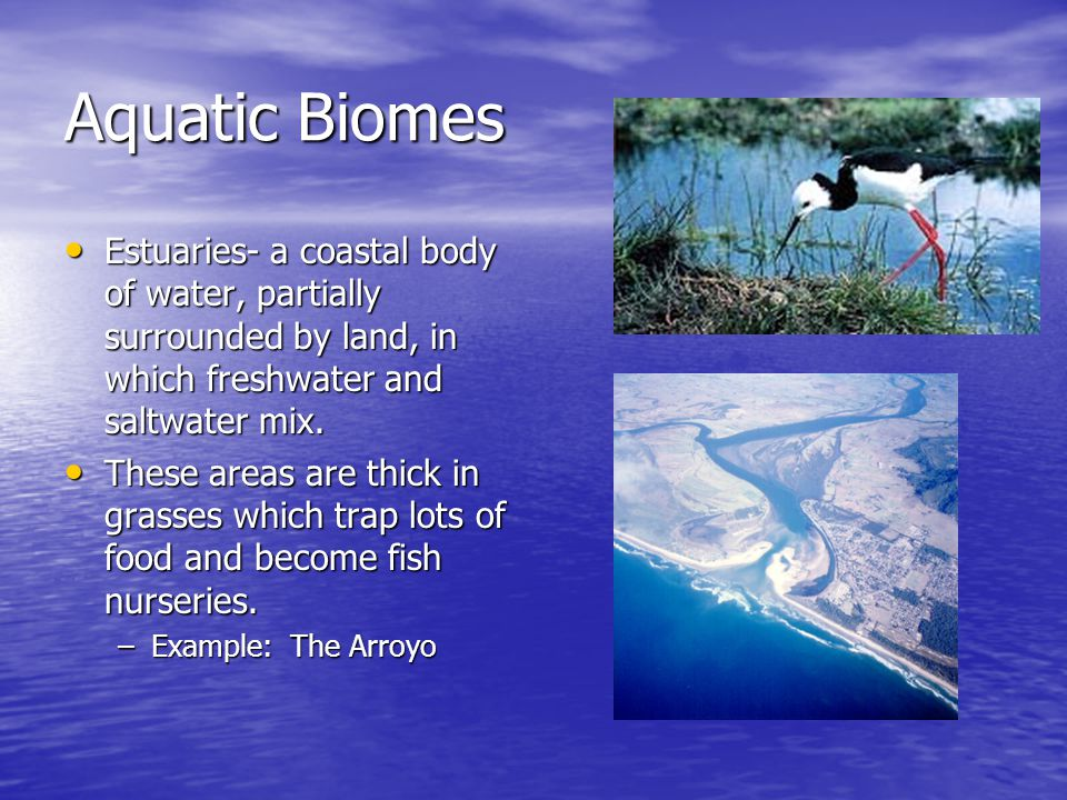 Aquatic Biomes Estuaries- a coastal body of water, partially surrounded by land, in which freshwater and saltwater mix.