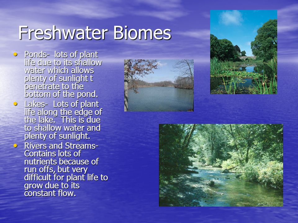 Freshwater Biomes Ponds- lots of plant life due to its shallow water which allows plenty of sunlight t penetrate to the bottom of the pond.
