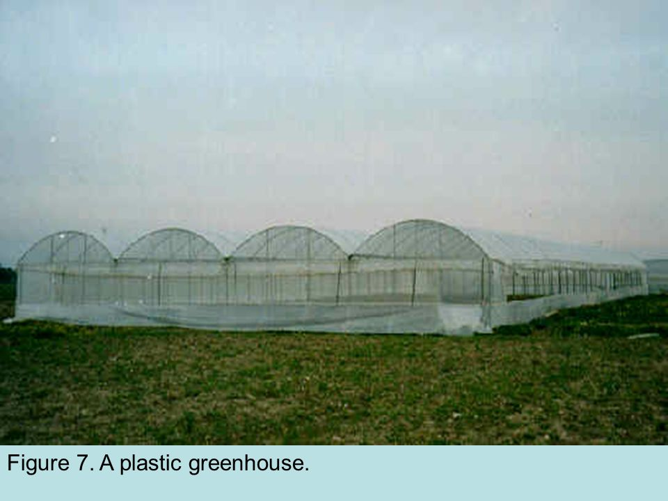 Figure 7. A plastic greenhouse.
