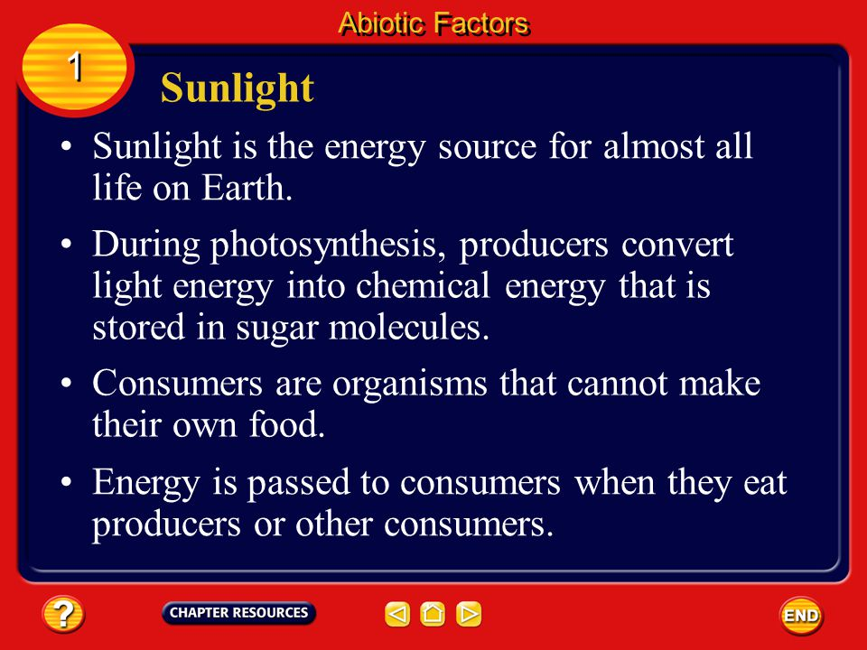 Sunlight 1 Sunlight is the energy source for almost all life on Earth.