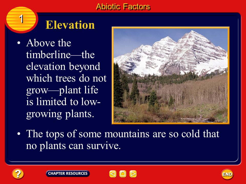 Abiotic Factors 1. Elevation. Above the timberline—the elevation beyond which trees do not grow—plant life is limited to low-growing plants.