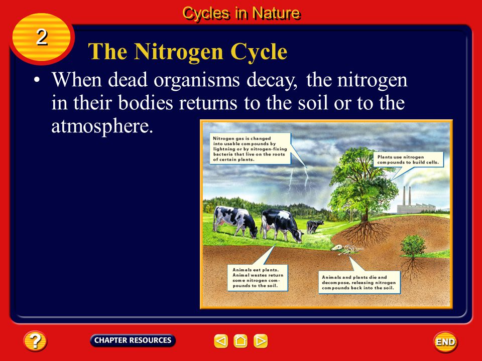 Cycles in Nature 2. The Nitrogen Cycle.