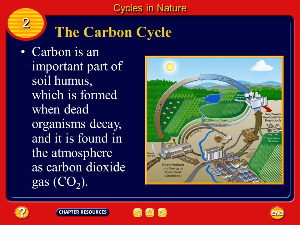 Chapter the nonliving environment ppt video online download for Living things found in soil