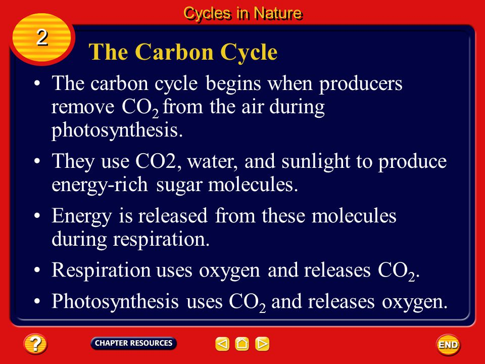 Cycles in Nature 2. The Carbon Cycle. The carbon cycle begins when producers remove CO2 from the air during photosynthesis.