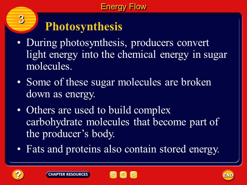 Energy Flow 3. Photosynthesis. During photosynthesis, producers convert light energy into the chemical energy in sugar molecules.