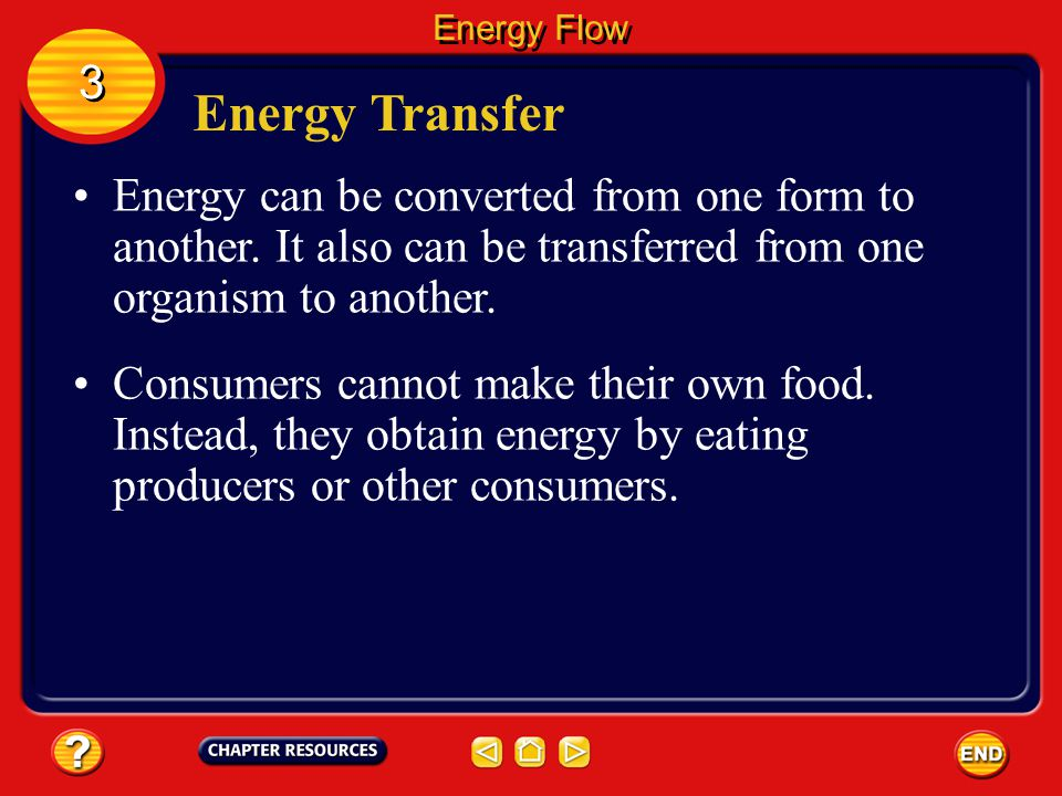 Energy Flow 3. Energy Transfer. Energy can be converted from one form to another. It also can be transferred from one organism to another.