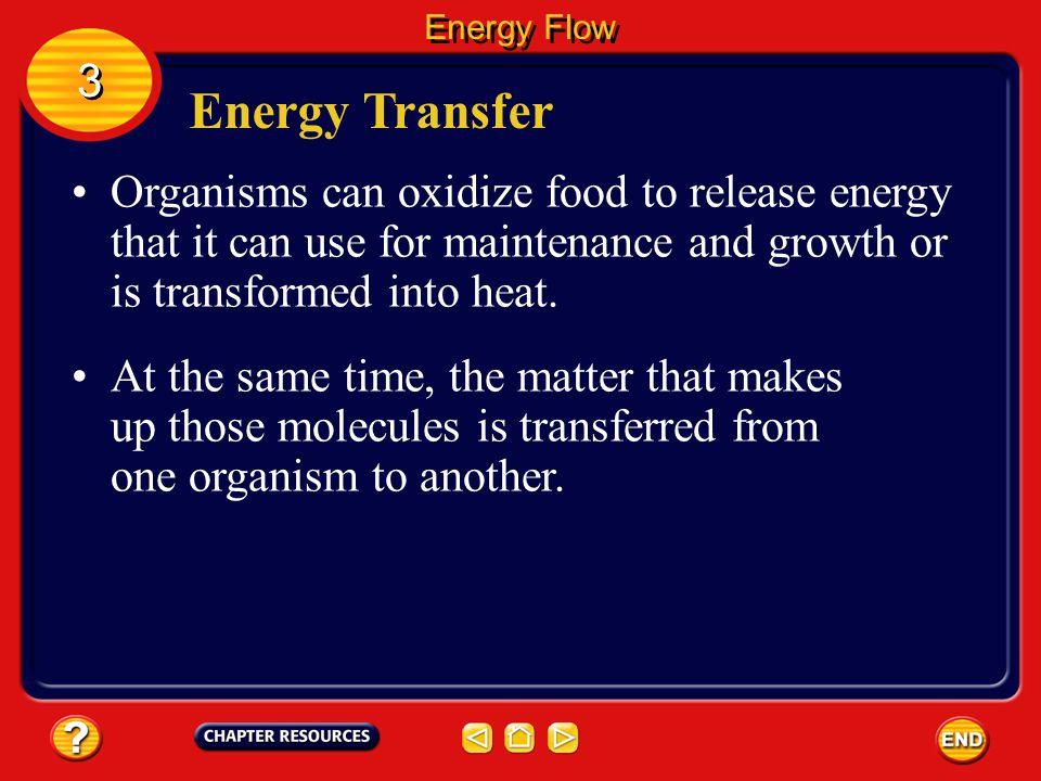 Energy Flow 3. Energy Transfer.
