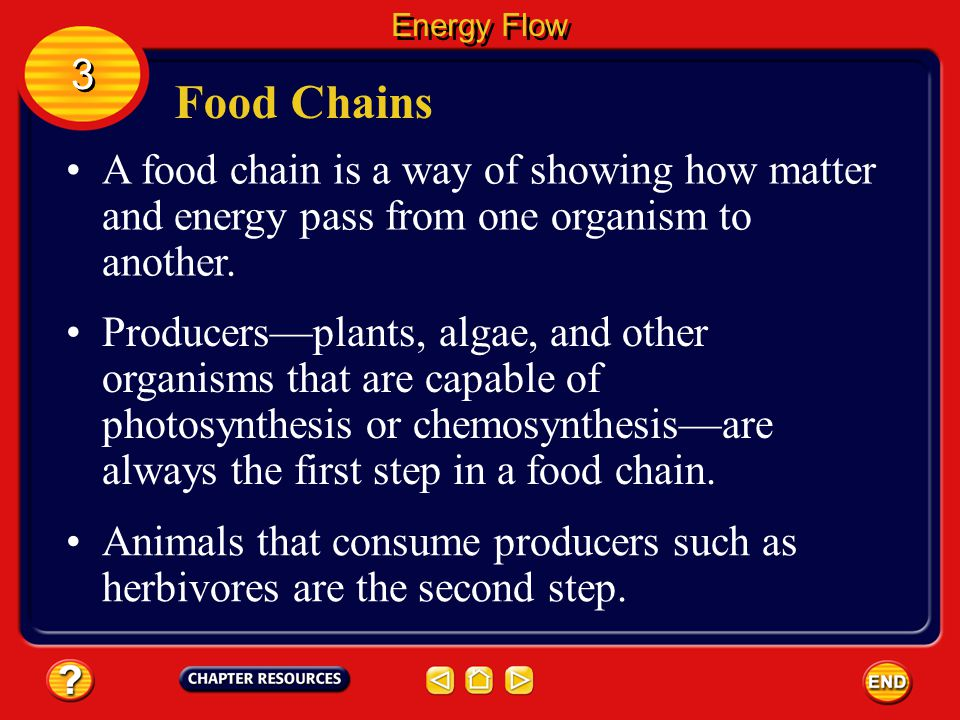 Energy Flow 3. Food Chains. A food chain is a way of showing how matter and energy pass from one organism to another.