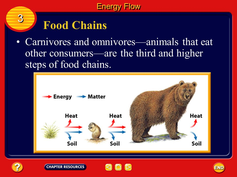 Energy Flow 3. Food Chains.