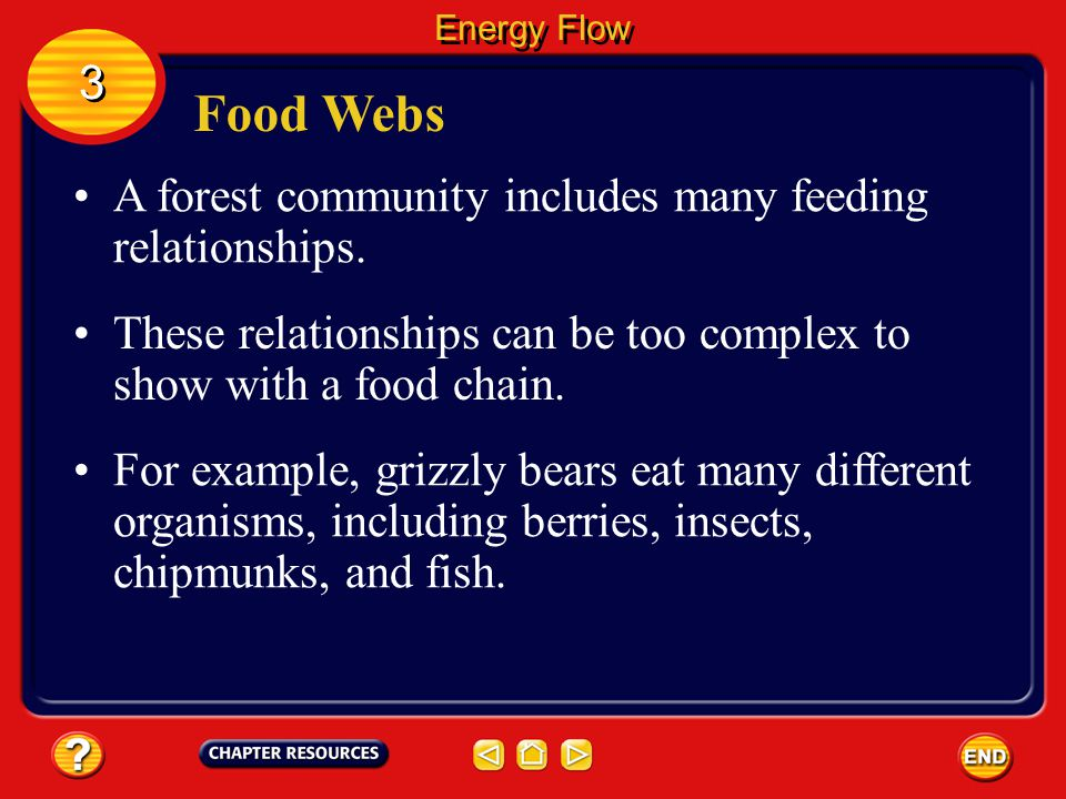 Food Webs 3 A forest community includes many feeding relationships.