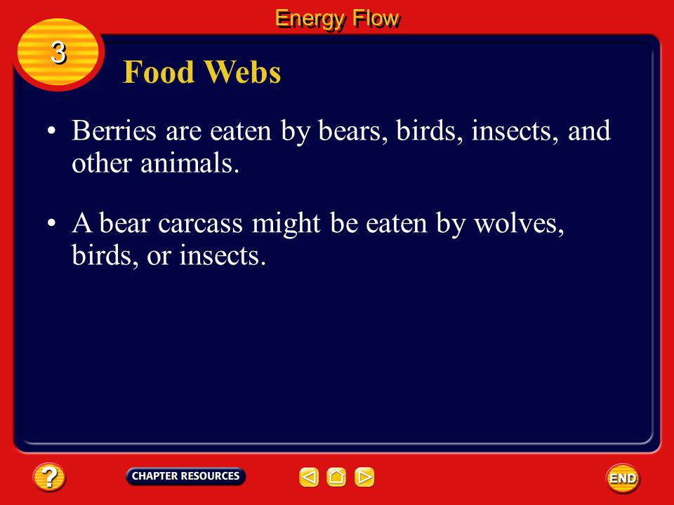 Energy Flow 3. Food Webs. Berries are eaten by bears, birds, insects, and other animals.