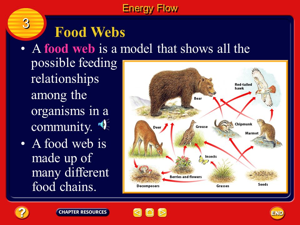 Food Webs 3 A food web is a model that shows all the