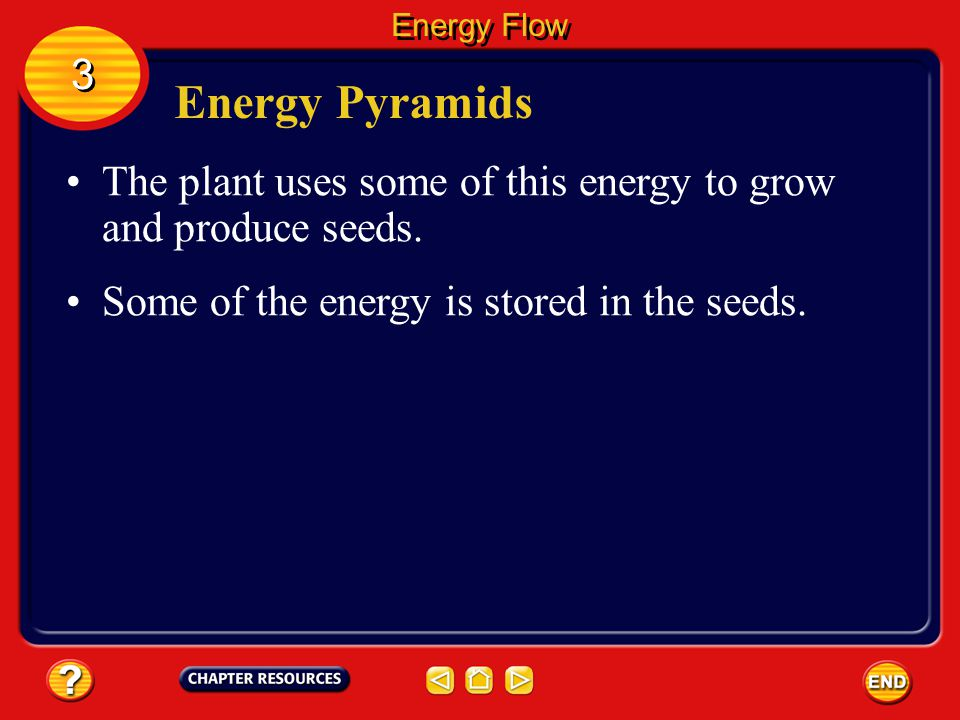 Energy Flow 3. Energy Pyramids. The plant uses some of this energy to grow and produce seeds.