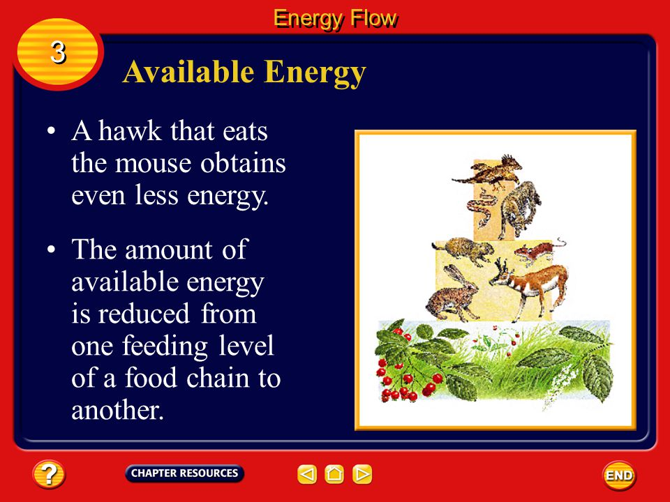 Energy Flow 3. Available Energy. A hawk that eats the mouse obtains even less energy.
