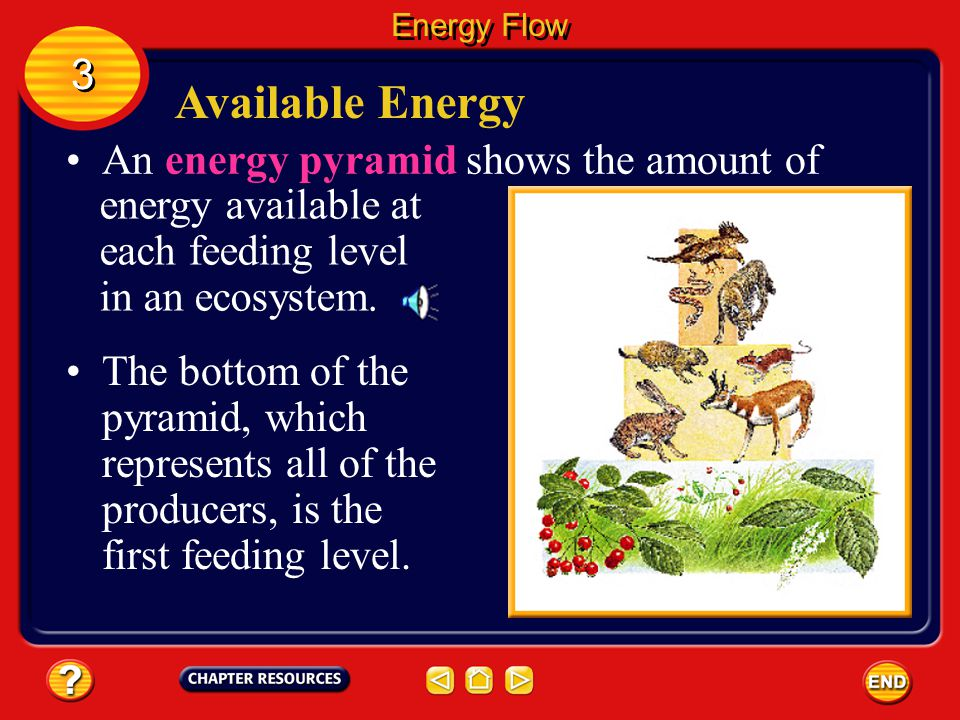 Available Energy 3 An energy pyramid shows the amount of