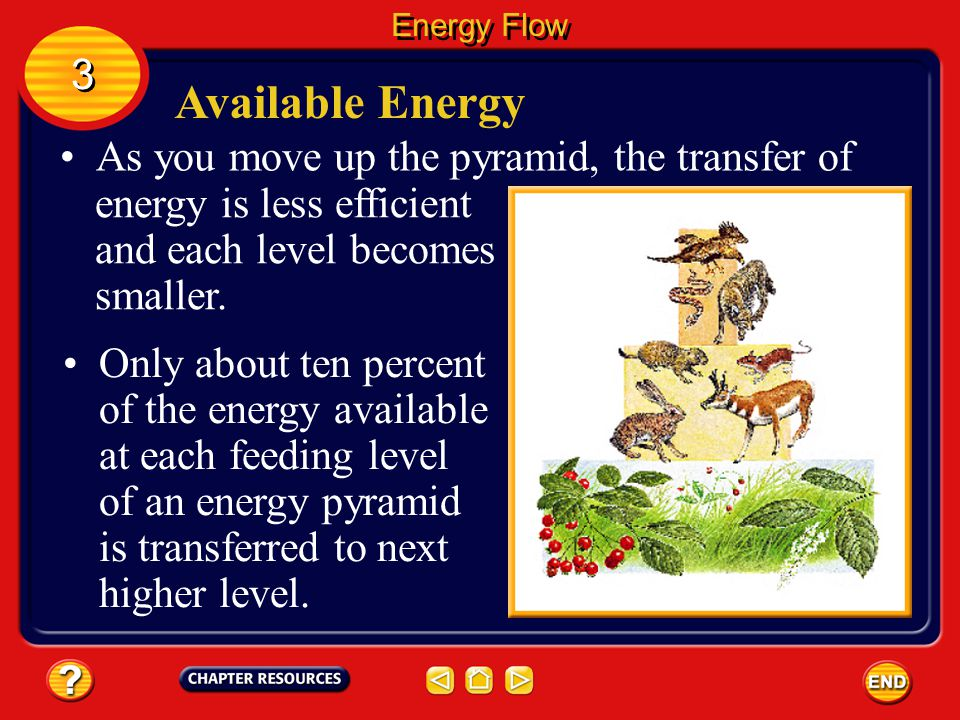 Available Energy 3 As you move up the pyramid, the transfer of