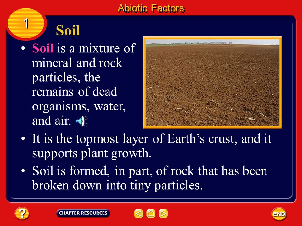 Abiotic Factors 1. Soil. Soil is a mixture of mineral and rock particles, the remains of dead organisms, water, and air.