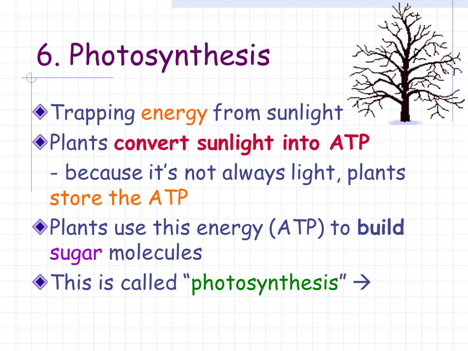 6. Photosynthesis Trapping energy from sunlight