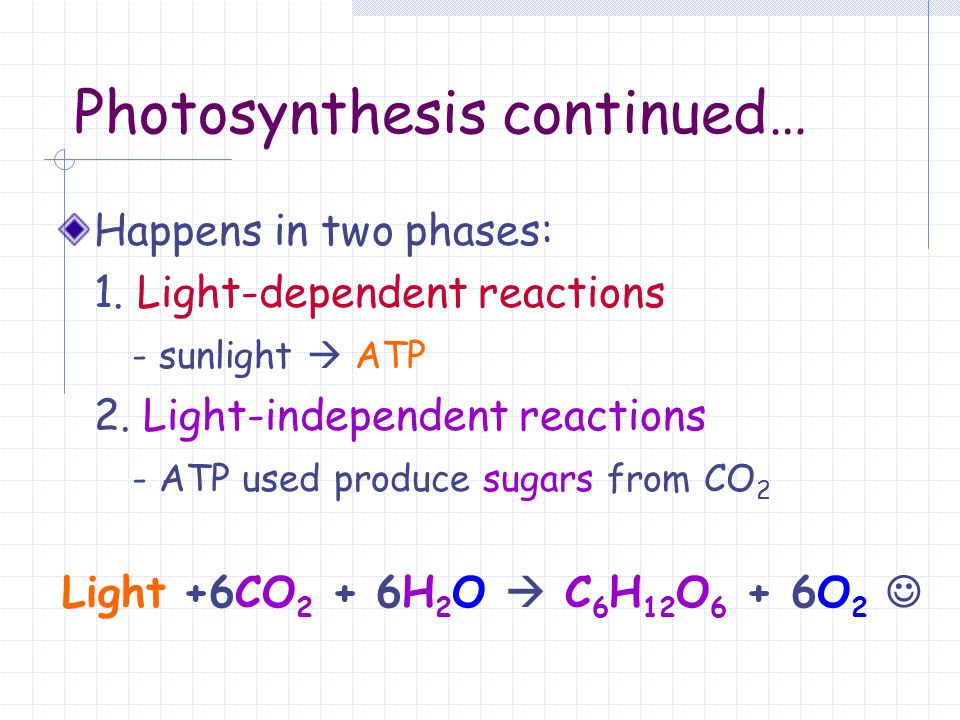 Photosynthesis continued…