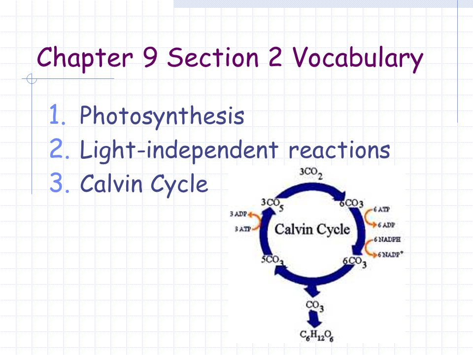 Human Anatomy And Physiology Chapter 9 Vocab – Periodic & Diagrams ...