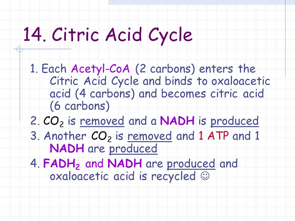 14. Citric Acid Cycle