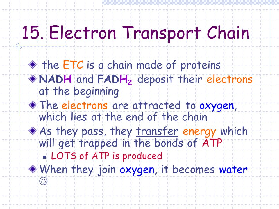 15. Electron Transport Chain