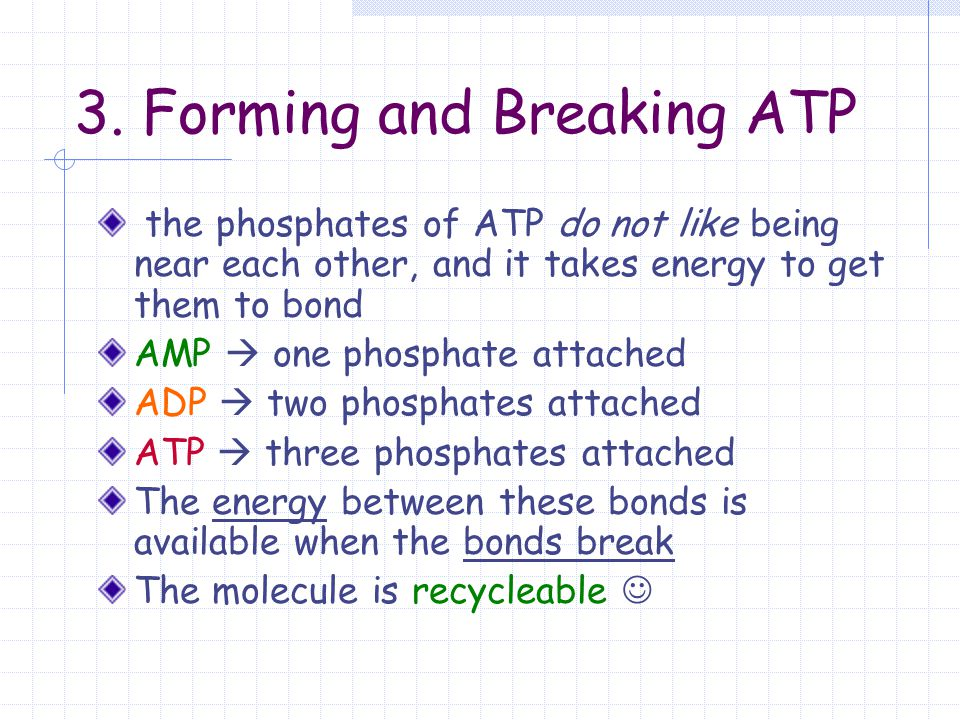 3. Forming and Breaking ATP