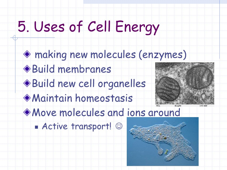 5. Uses of Cell Energy making new molecules (enzymes) Build membranes