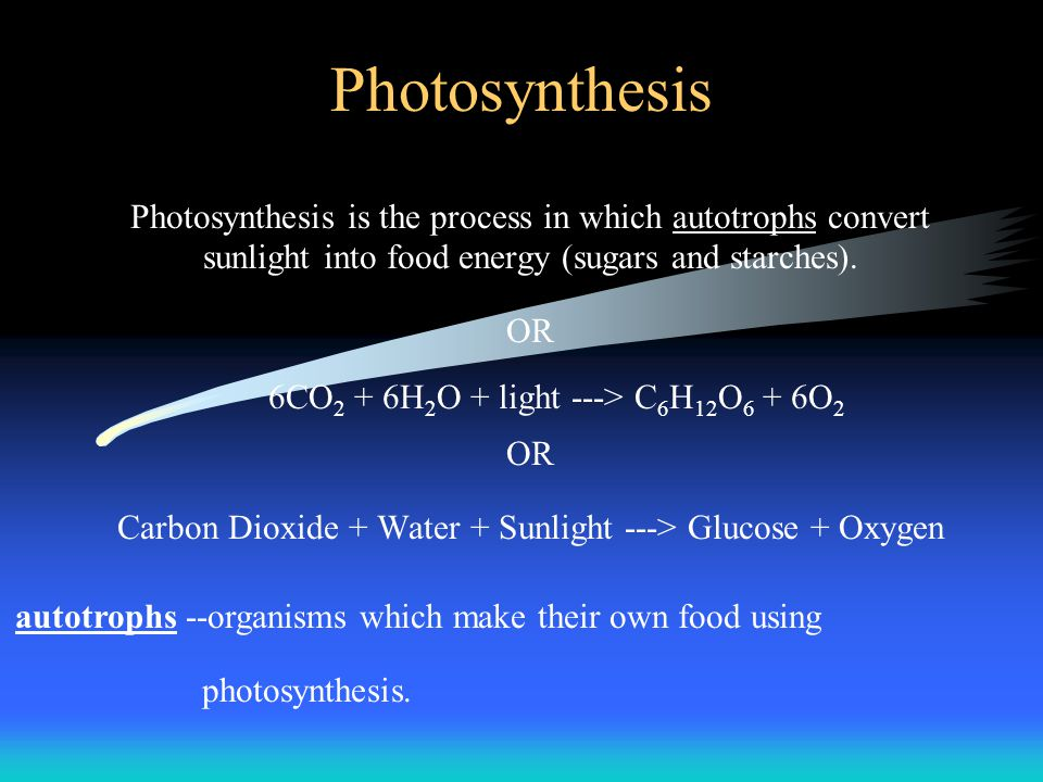 Photosynthesis Photosynthesis is the process in which autotrophs convert sunlight into food energy (sugars and starches).