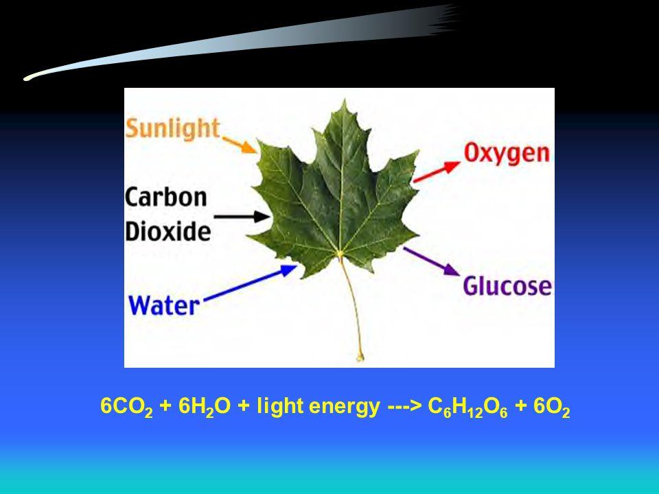6CO2 + 6H2O + light energy ---> C6H12O6 + 6O2