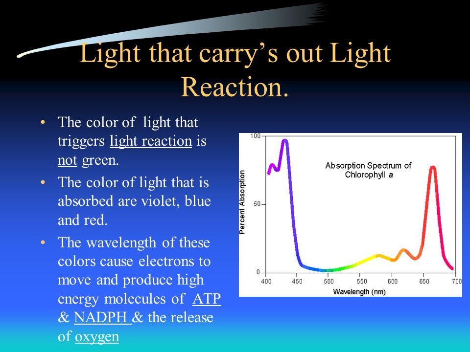 Light that carry's out Light Reaction.