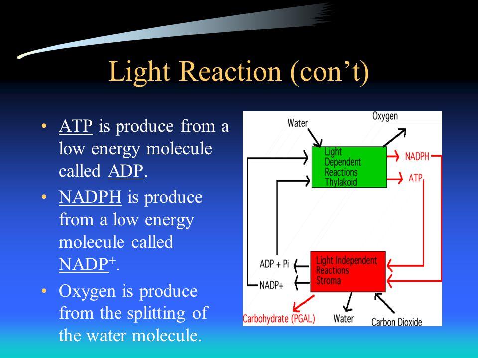 Light Reaction (con't)