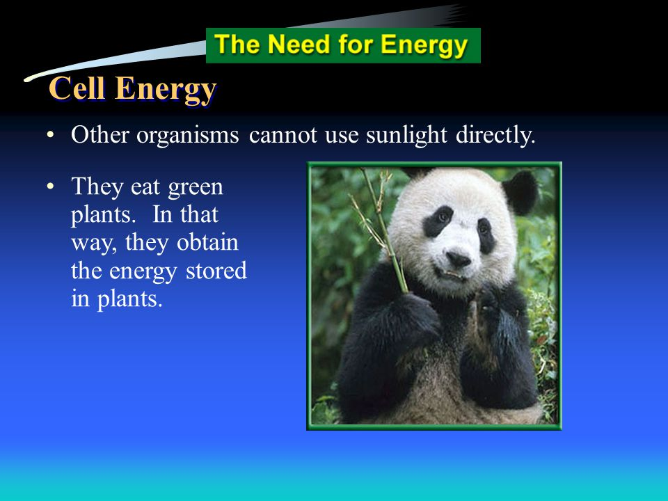 Cell Energy Other organisms cannot use sunlight directly.
