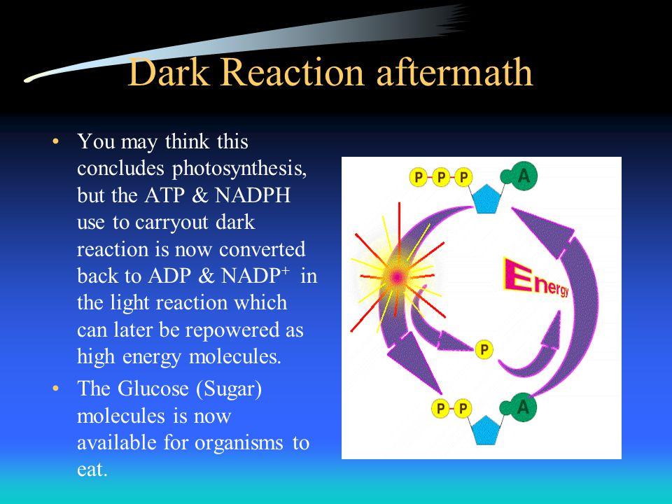 Dark Reaction aftermath