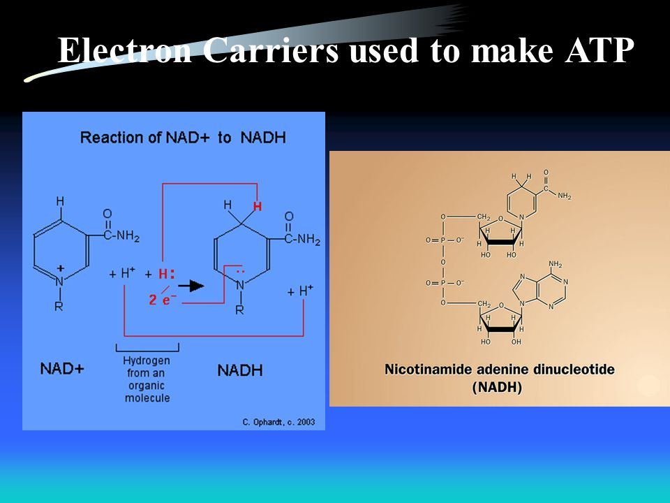 Electron Carriers used to make ATP