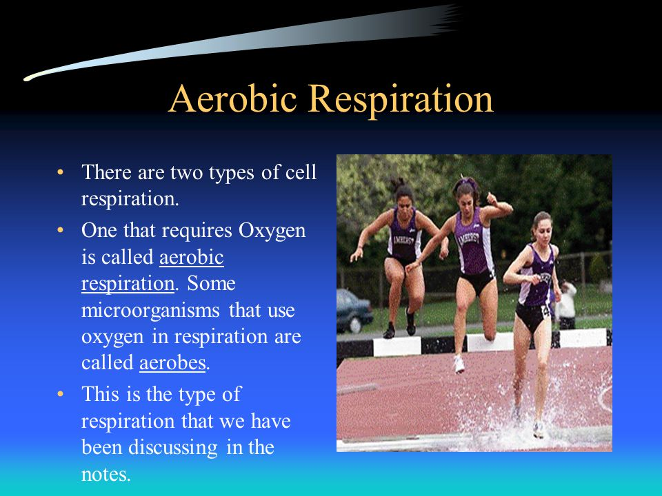 Aerobic Respiration There are two types of cell respiration.