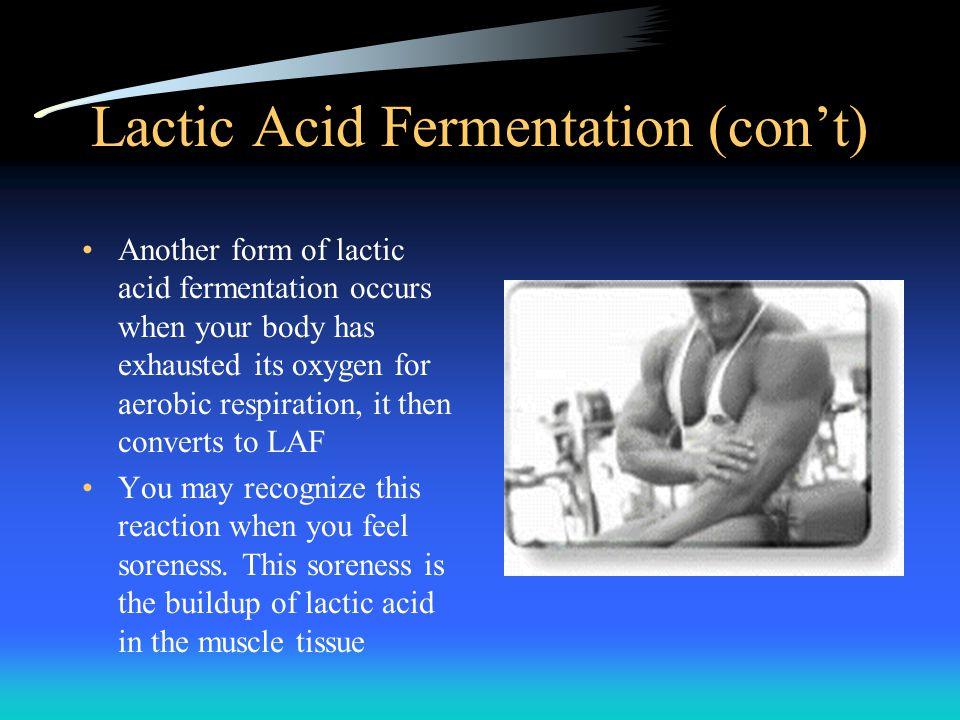 Lactic Acid Fermentation (con't)