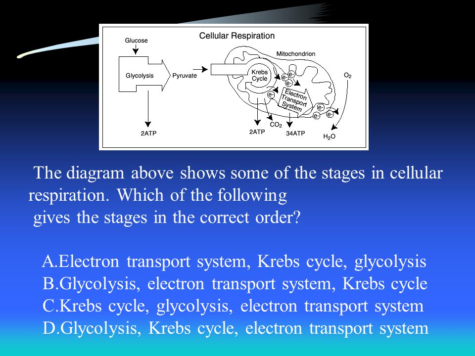 The diagram above shows some of the stages in cellular respiration
