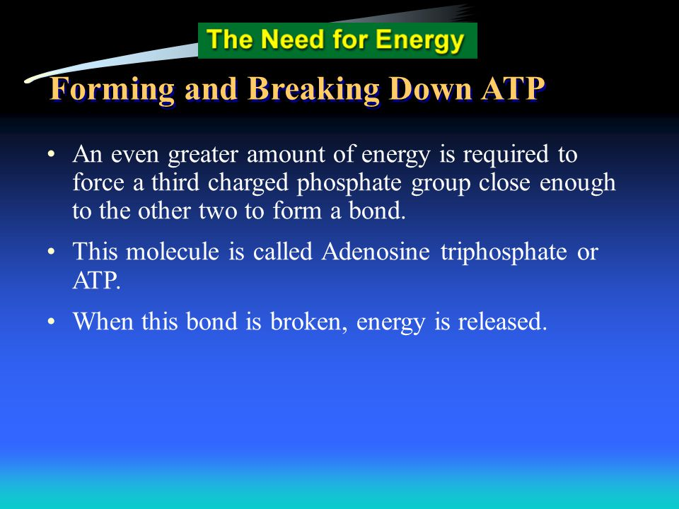 Forming and Breaking Down ATP