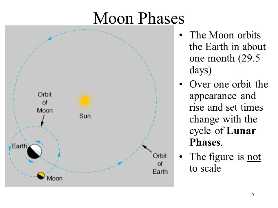 Moon Phases The Moon orbits the Earth in about one month (29.5 days)