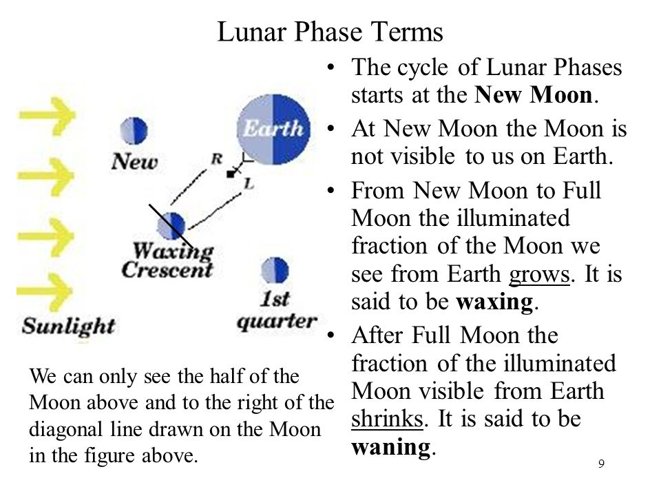 Lunar Phase Terms The cycle of Lunar Phases starts at the New Moon.