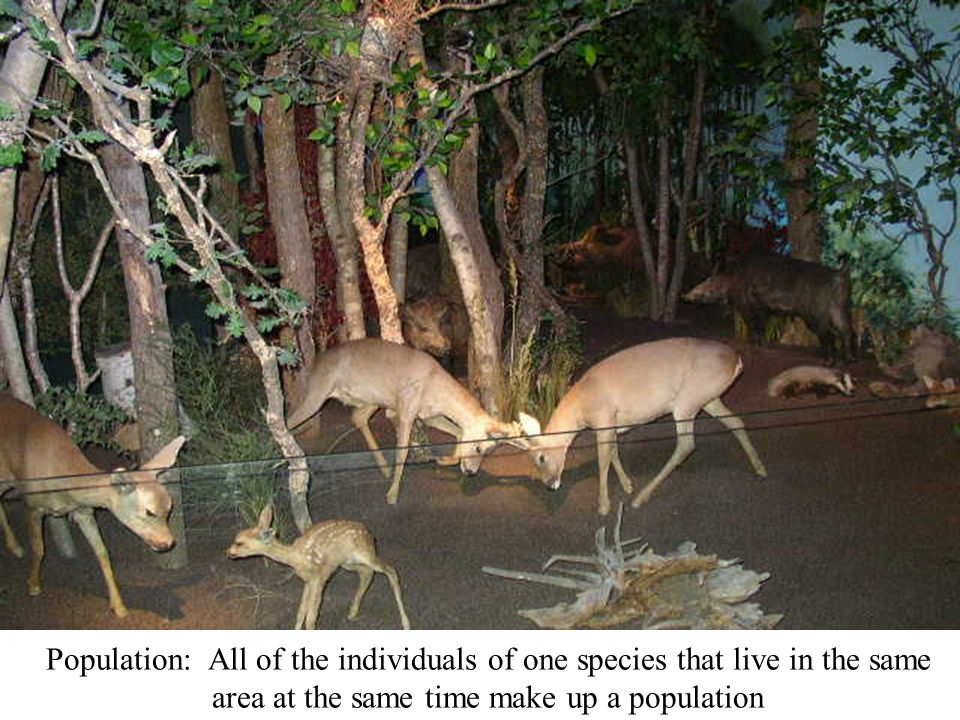 Population: All of the individuals of one species that live in the same area at the same time make up a population
