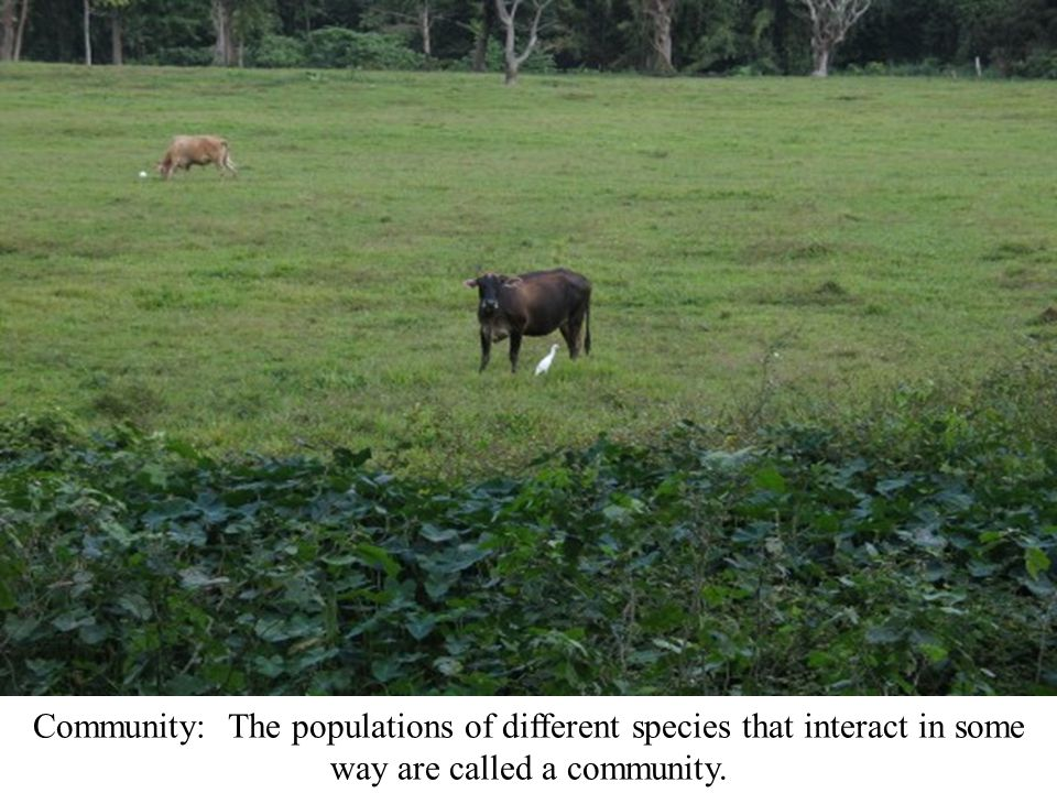 Community: The populations of different species that interact in some way are called a community.