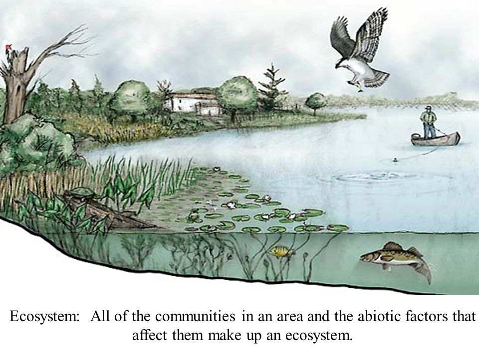 Ecosystem: All of the communities in an area and the abiotic factors that affect them make up an ecosystem.