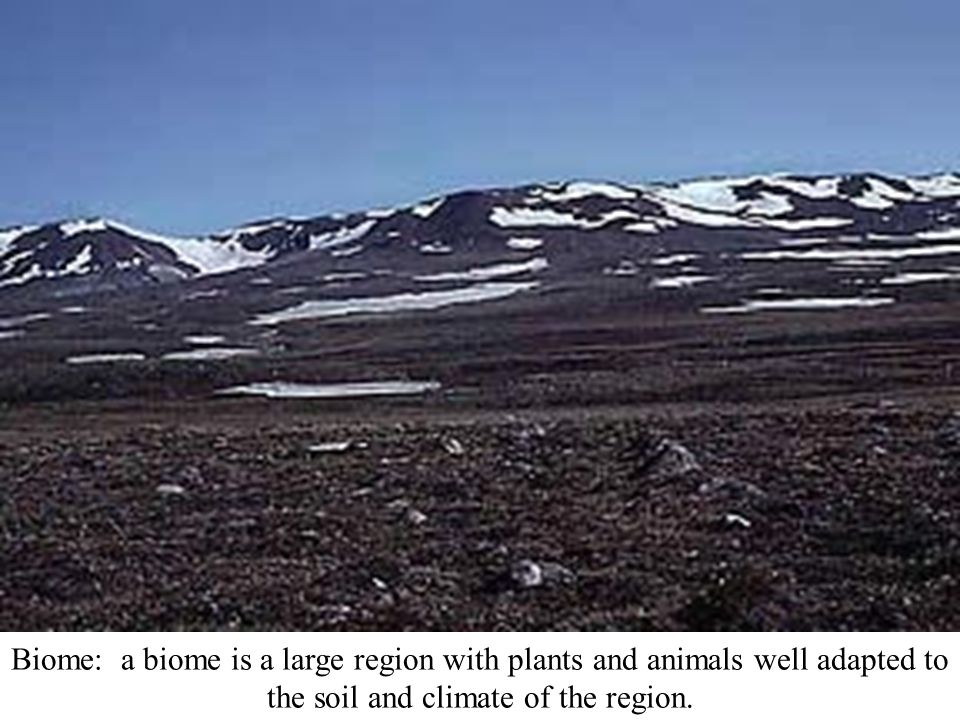 Biome: a biome is a large region with plants and animals well adapted to the soil and climate of the region.