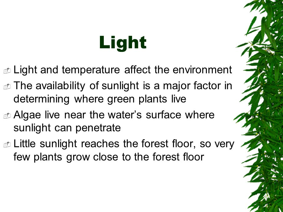Light Light and temperature affect the environment