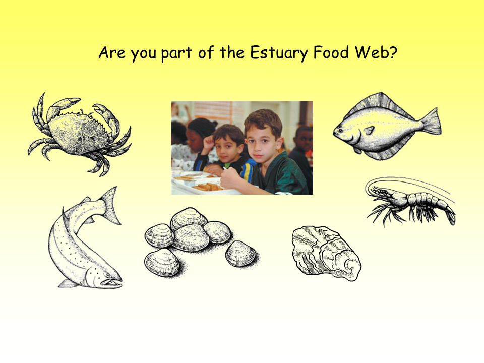 Are you part of the Estuary Food Web