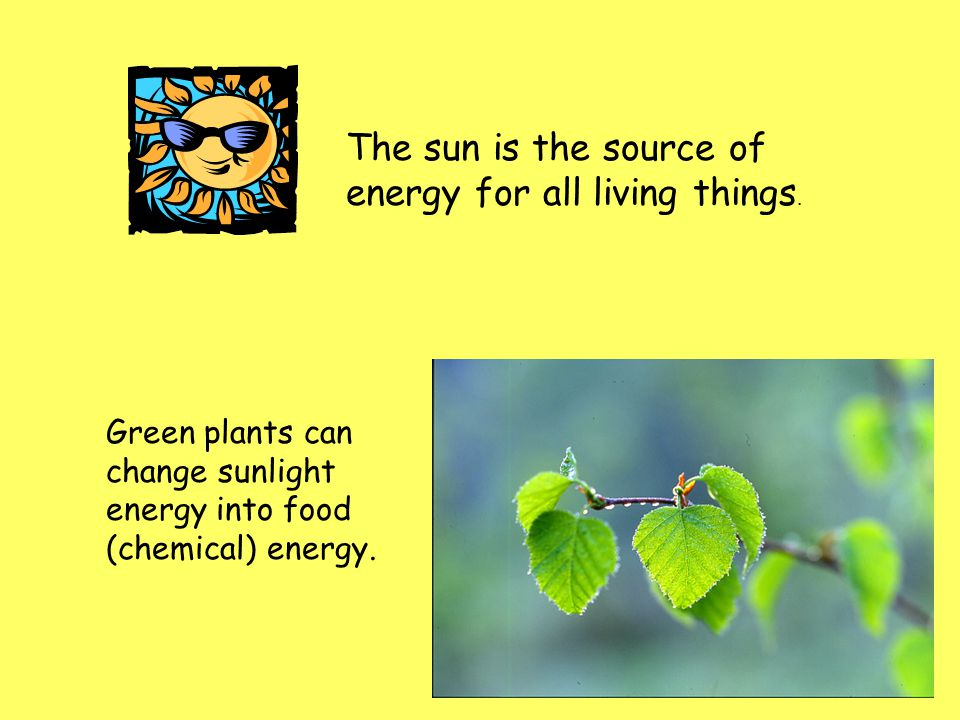 The sun is the source of energy for all living things.